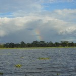 Rainbow in the Amazon